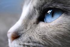 بهترین طرح جابر چهارم دبستان تشخیص رنگ در حیوانات