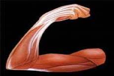 دانلود جزوه انقباض عضلاني