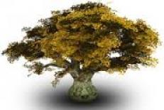 استفاده از نرم افزارمتلب جهت شبيه سازی ارتعاش درخت بادام