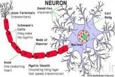 دانلود مقاله شبکه های عصبی مصنوعی